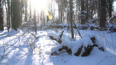 Trees in the snow in the winter forest, dolly 1 Stock Footage