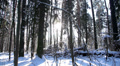 beautiful snowy winter in the forest 13 HD Footage