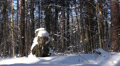beautiful snowy winter in the forest 9 HD Footage