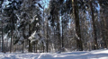 beautiful snowy winter in the forest 8 Footage