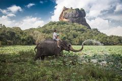 Man and child riding on the back of elephant with rock of sigiriya as backdrop Stock Photos