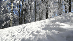Snowed forest, looking up to the blue sky Stock Footage