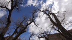 Cottonwood Trees Time Lapse on the Colorado Plateau Stock Footage