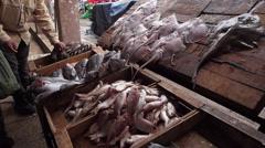 Oujda Medina Morocco Market Fish Seller Stock Footage
