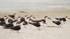 Tropical Birds on Florida Coast Stock Footage