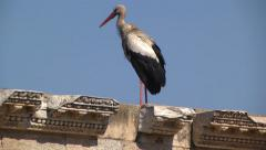 WHITE STORK (CICONIA CICONIA) PLACED ON ROMAN RUINS #3 Stock Footage