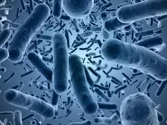 Bacteria seen under a  scanning microscope - stock illustration