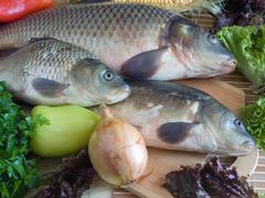 Carp fish close-up - stock photo