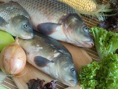 Carp fish close-up on chopping board - stock photo
