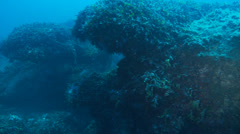 Underwater footage red coral corsica corse mediterranean Stock Footage