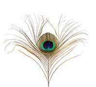 Peacock Feather Isolated Stock Photos