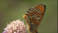 Butterfly On Flower Stock Footage