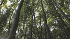 Group of trees in the wind at Ruegen Island B-Roll Stock Footage
