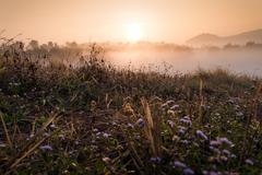 flower and sun rise at phuthapboek khoo kho , phetchabun thailand - stock photo