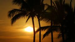 Palm trees at sunset, Big Island, Hawaii - stock footage