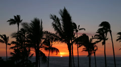 Sunset over the Pacific Ocean with palm trees, Big Island, Hawaii - stock footage