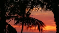 Stock Video Footage of Palm branches at sunset, Big Island, Hawaii