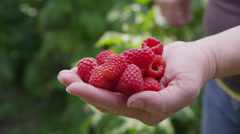 Handful of red raspberries Stock Footage