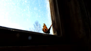 Stock Video Footage of butterfly on the window of the shed