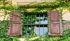 wooden window box with climber - stock photo