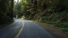 Driving POV Ferny Redwood Grove Curves and Hill Stock Footage
