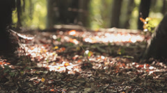 Ground Of A Forest With Leaves Stock Footage
