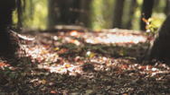 Stock Video Footage of Ground Of A Forest With Leaves