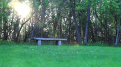 Bench in the Woods Stock Footage