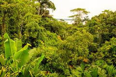 Tropical Rainforest Landscape Stock Photos