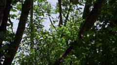 Shady Alder Trees with Dappled Snlight Leaves in Breeze River Water - stock footage