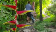 Stock Video Footage of Couple walking down path in tropical jungle, Costa Rica