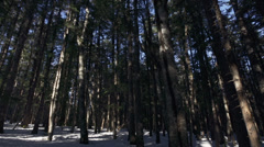 Snowy Woods and Windy Trees Blowing Tilt Up with Audio Stock Footage