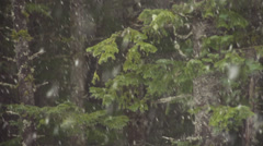 Spruce Boughs in Falling Snow Forest Slow Motion Stock Footage
