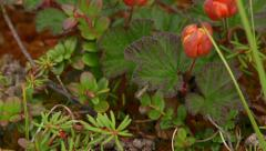 Tilt Up Macro Coral like Tundra Moss Lichen to Tiny Succulents and F Stock Footage
