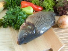 Carp fish - stock photo