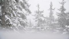 Winter Forest Scene Slow Motion Pan Snowfall Dreamy Haze Stock Footage