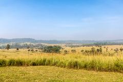 scenery of grass land in thailand - stock photo