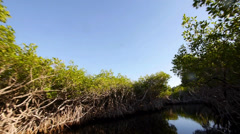 Ride through mangrove forest wide angle shot Stock Footage