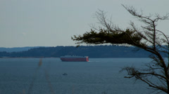 Freighter And Tree Stock Footage