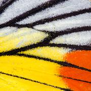 butterfly wing texture - stock photo