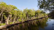 Stock Video Footage of airboat ride through mangrove forest wide angle shot