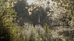 White church steeple through flower blossom tree Stock Footage
