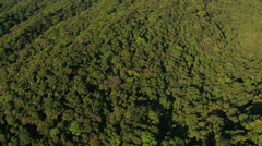 Flying over trees to reveal city, Rio de Janeiro, Brazil Stock Footage