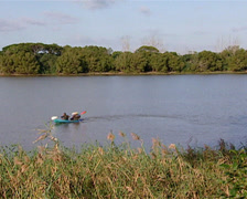 Canoeists paddling across a lake / dam, Durban Stock Footage