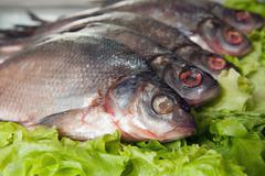 fresh-water fish - stock photo