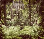 Stock Photo of fern forest filtered