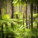 Stock Photo of fern forest