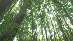 Steady Shot Of Trees In A Forest Stock Footage