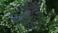 Spiders web in the morning Stock Footage