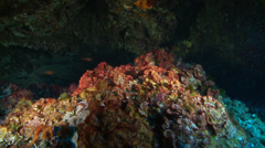 Underwater footage coralline corsica corse mediterranean - stock footage
